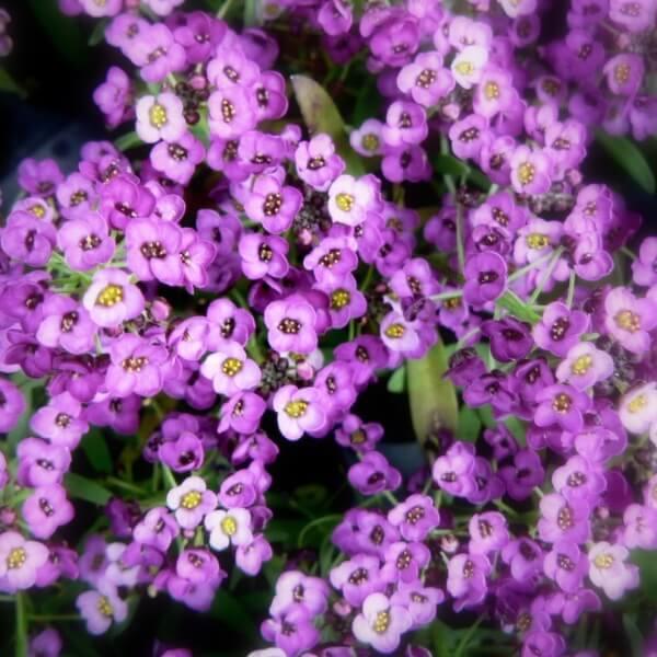 Растения  Женский журнал WomanAdviceru