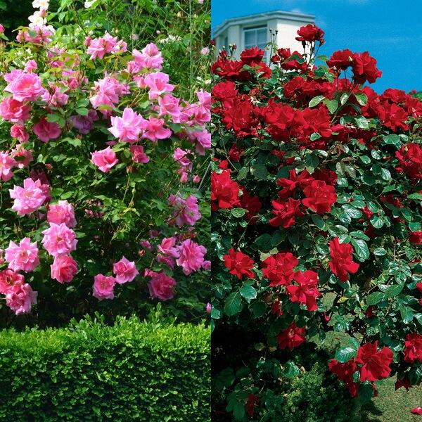 Цветы с необычным описанием и фото