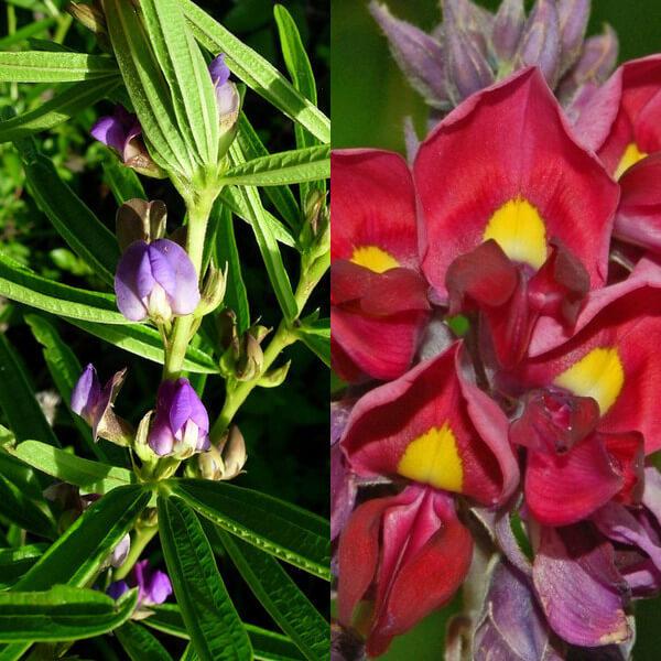 Plant Inventory Rukwa Region; Mbizi Forest Reserve